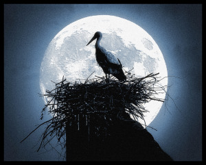 stork nest in moonlight