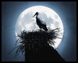 stork nest in moonlight